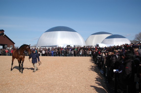 Darley Annual Event, 3 Airstar Domes (700 people), Sapporo, Japan